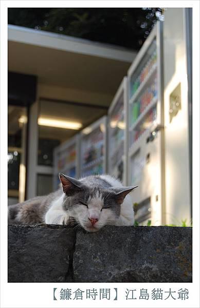 江島貓大爺的內心小劇場