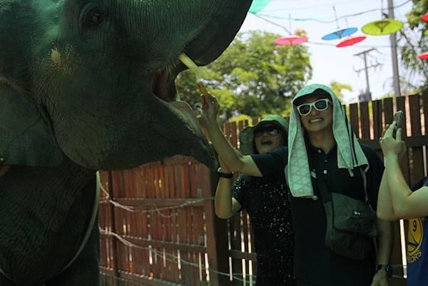 餵食大象2