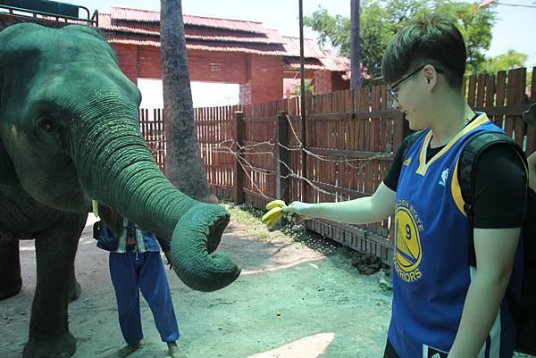 餵食大象3