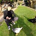 Feed Duck