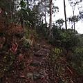 Path of Forth Falls2