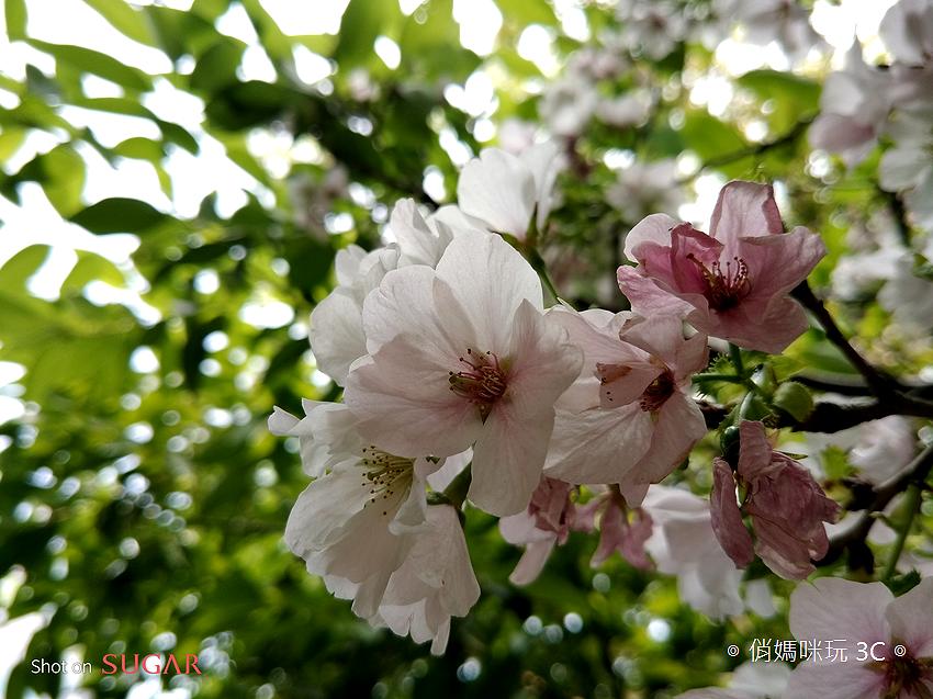 糖果手機 SUGAR S11 開箱-拍照 (俏媽咪玩3C) (3).png