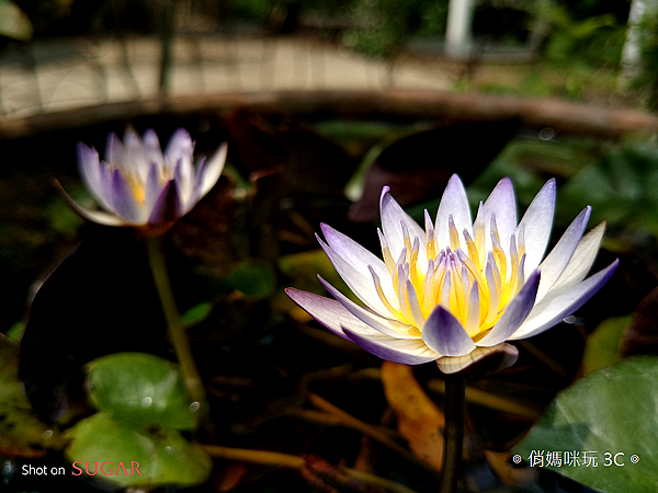 糖果手機 SUGAR S11 開箱-拍照 (俏媽咪玩3C) (7).png