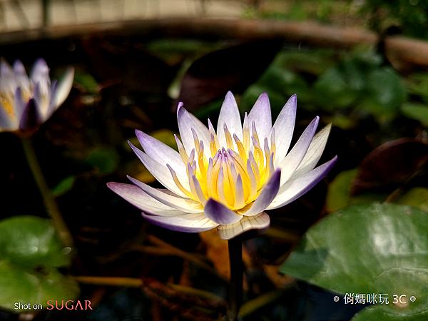 糖果手機 SUGAR S11 開箱-拍照 (俏媽咪玩3C) (6).png