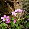 糖果手機 SUGAR S11 開箱-拍照 (俏媽咪玩3C) (13).png
