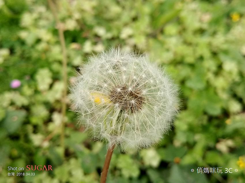 糖果手機 SUGAR S11 開箱-拍照 (俏媽咪玩3C) (15).png