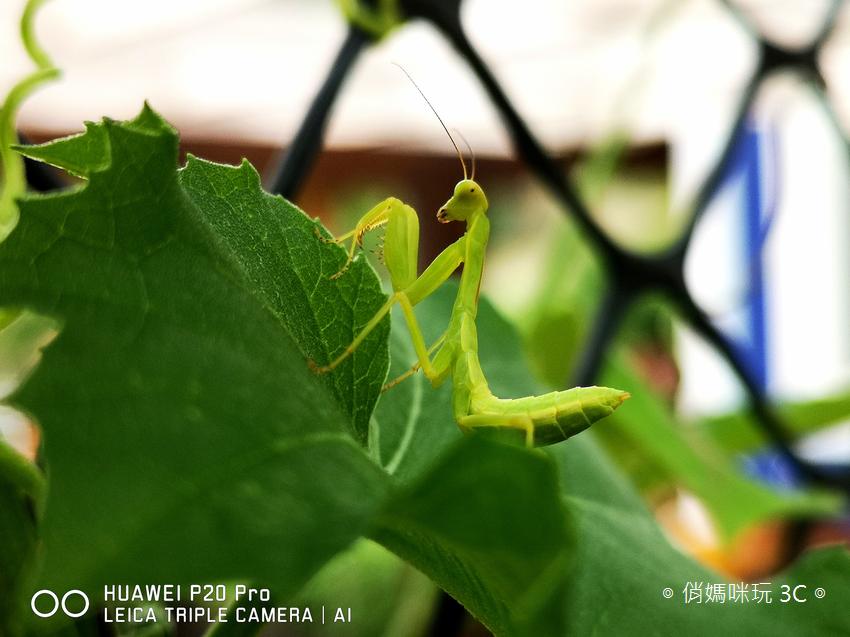 HUAWEI P20 Pro 拍照效果(俏媽咪玩3C)(154).png
