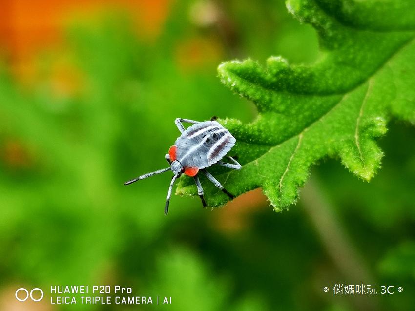 HUAWEI P20 Pro 拍照效果(俏媽咪玩3C)(155).png