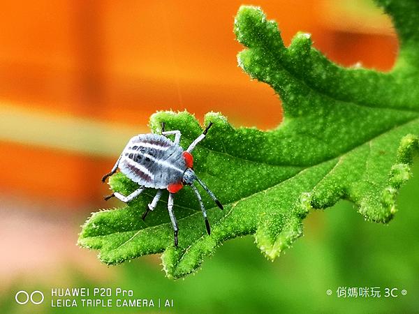 HUAWEI P20 Pro 拍照效果(俏媽咪玩3C)(156).png