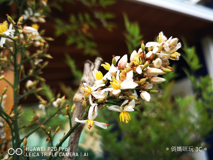 HUAWEI P20 Pro 拍照效果(俏媽咪玩3C)(148).png