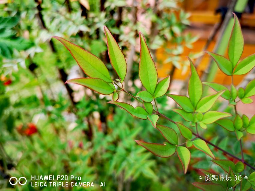 HUAWEI P20 Pro 拍照效果(俏媽咪玩3C)(149).png