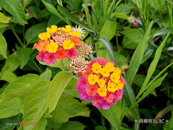 SUGAR S20s 開箱 (俏媽咪玩3C) (31).png