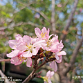 HUAWEI P30 拍照 (俏媽咪玩 3C) (17).png