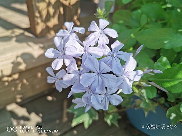 HUAWEI P30 拍照 (俏媽咪玩 3C) (22).png