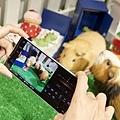 圖說三、Xperia 1 II帶來動物眼即時眼部追蹤對焦功能,搭配高速連拍,輕鬆拍下寵物玩耍的瞬間,甚至連毛流都能清晰捕捉!(3).jpg
