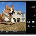 圖說一、Xperia 1 II為全球首款具備動物眼即時眼部追蹤對焦功能的手機,為拍攝寵物而生!(1).jpg