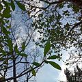 SUGAR S50 拍照 (俏媽咪玩3C) (13).png