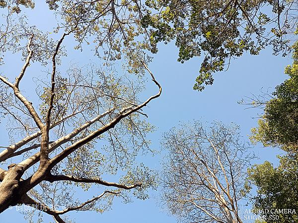 SUGAR S50 拍照 (俏媽咪玩3C) (95).png