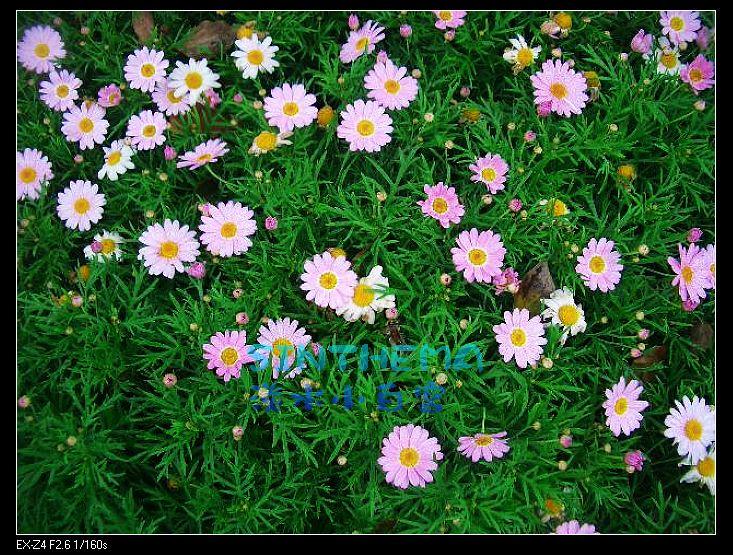 nEO_IMG_CIMG6609.jpg