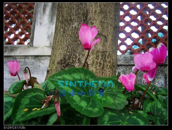 nEO_IMG_CIMG6631.jpg