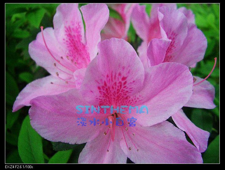 nEO_IMG_CIMG6634.jpg