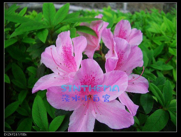 nEO_IMG_CIMG6635.jpg