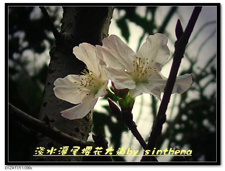 nEO_IMG_CIMG6841.jpg