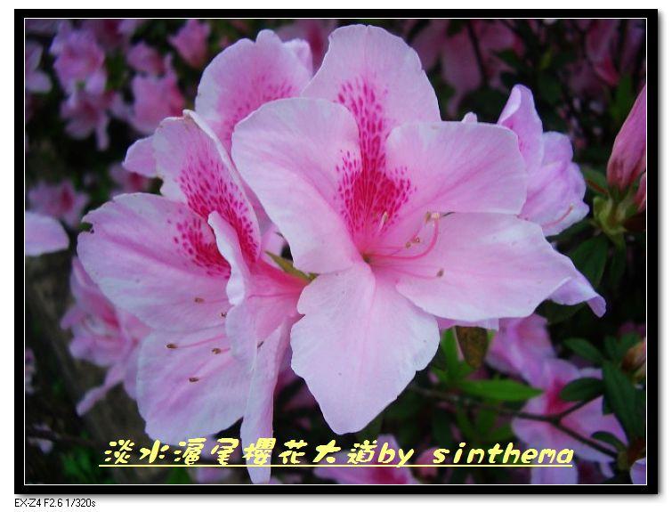nEO_IMG_CIMG6899.jpg