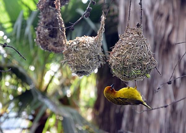 bird-nests-1695704_960_720.jpg