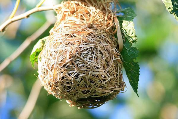 birds-nest-1776717_960_720.jpg