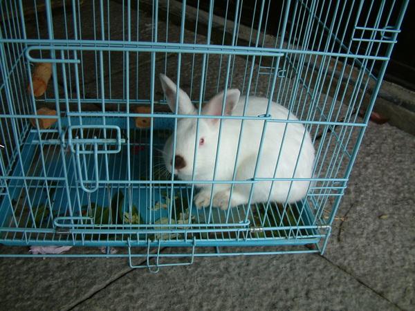 可愛滴兔子^^