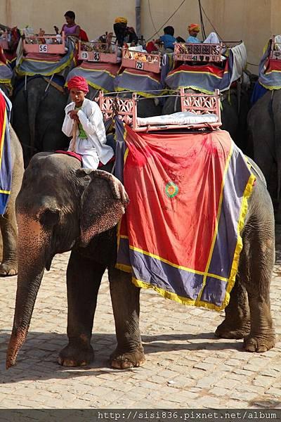 2010印度 (33).jpg