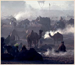 埃及6.jpg