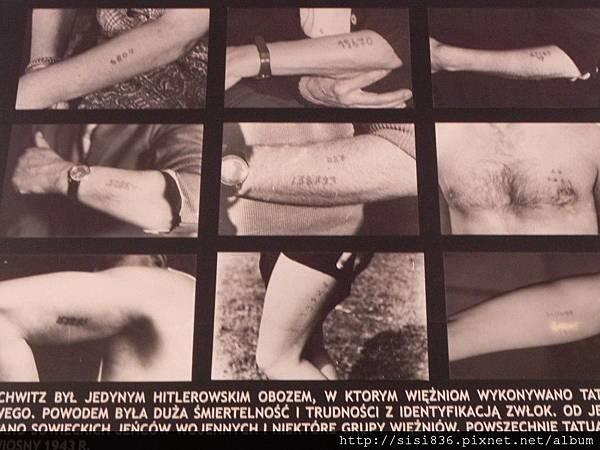 每個進入集中營的猶太人身上都會被刺上個人的檔案編號