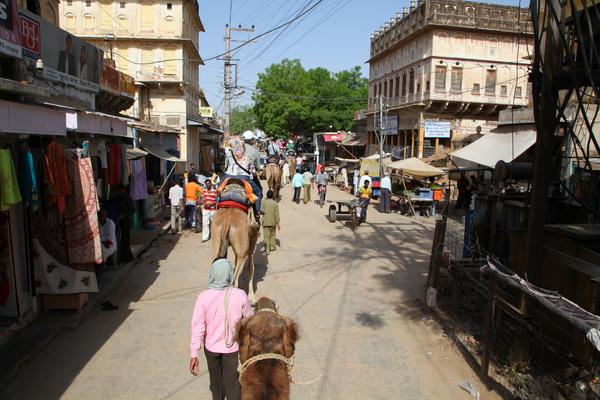 騎駱駝遊大街、看熱鬧…
