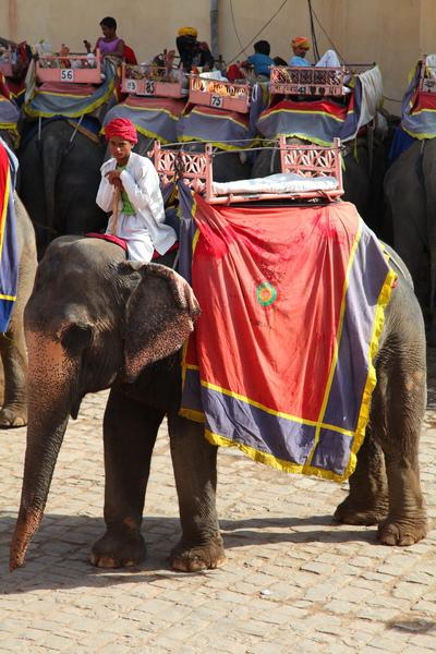 準備騎乘大象上琥珀堡