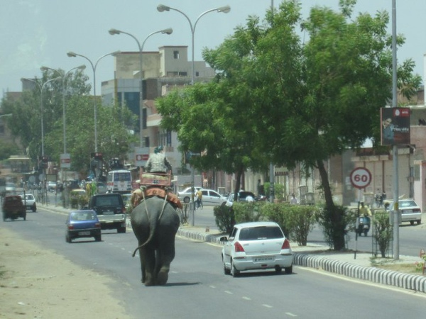 大象也上街了