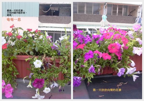 兩張花的拼貼.jpg