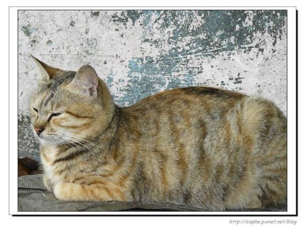 十分貓二.jpg