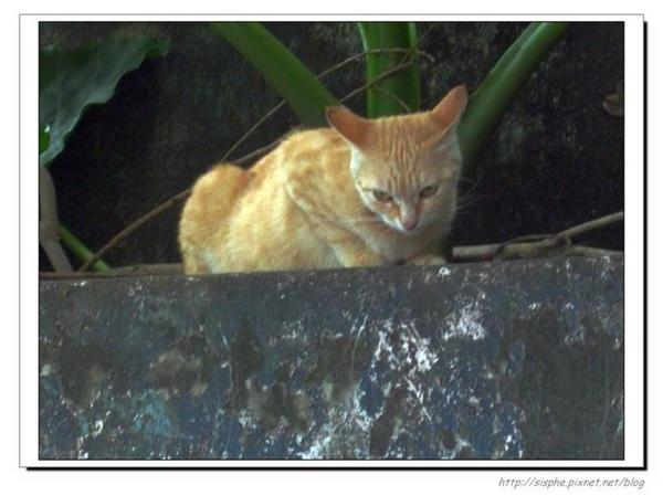 十分貓三.jpg