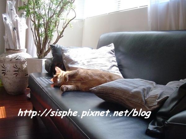 養尊處優的貓.jpg