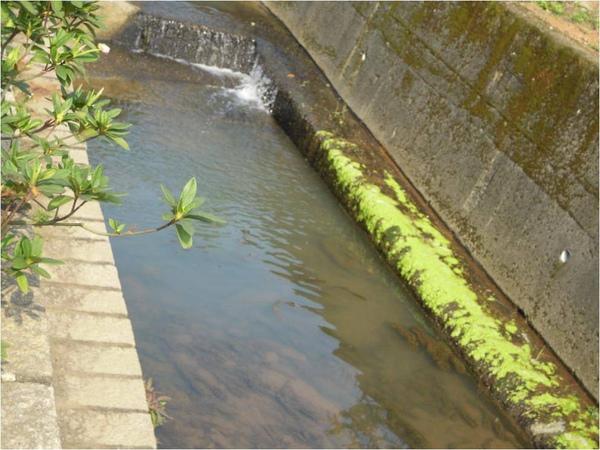 水流.jpg
