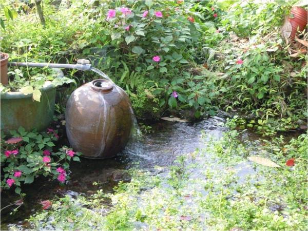 院子的水塘.jpg