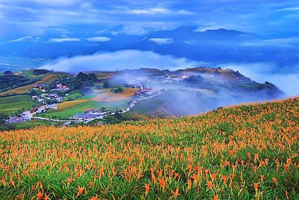 2016年花蓮六十石山金針花季