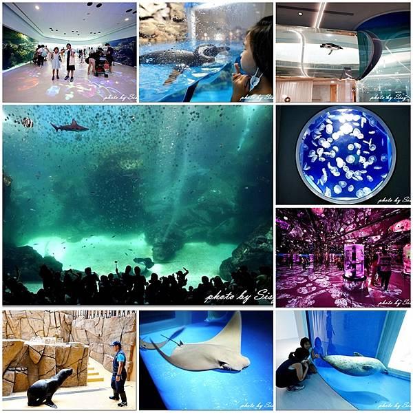Xpark水族館2020攻略