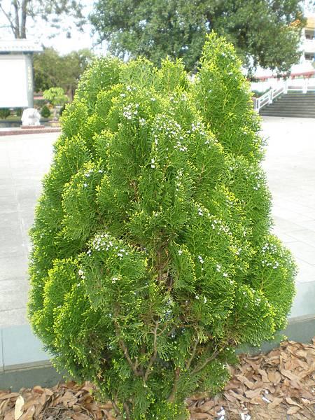 130302 植物.JPG