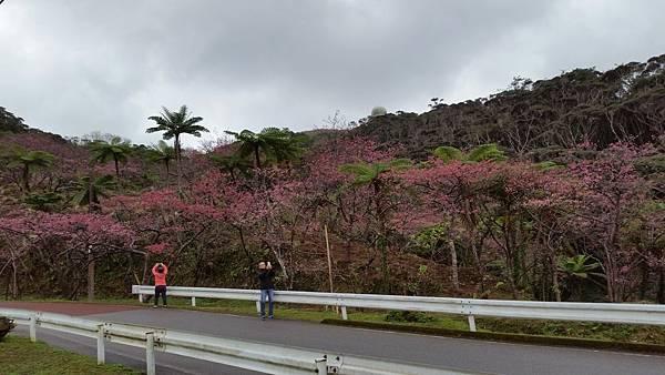 八重岳櫻之森公園20170201_172629.jpg