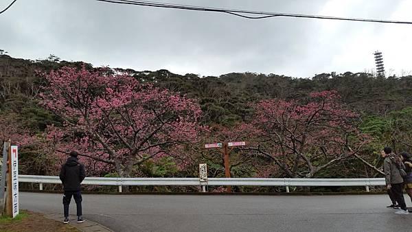 八重岳櫻之森公園20170201_172511.jpg