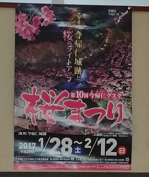 寒緋櫻20170201_115950.jpg