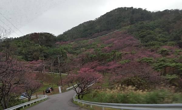 八重岳櫻之森公園20170201_165509.jpg